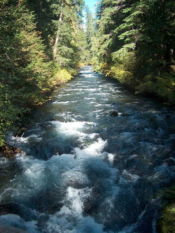 Water Stream Creek Mckenzie River Bend Oregon Poster featuring the photograph Rushing Waters by Janet Hall