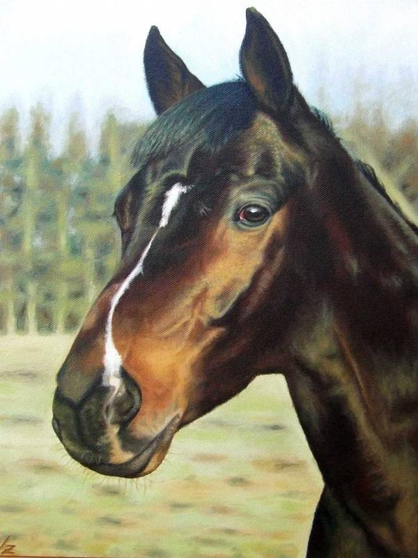 Horse Poster featuring the painting Russian Horse by Nicole Zeug