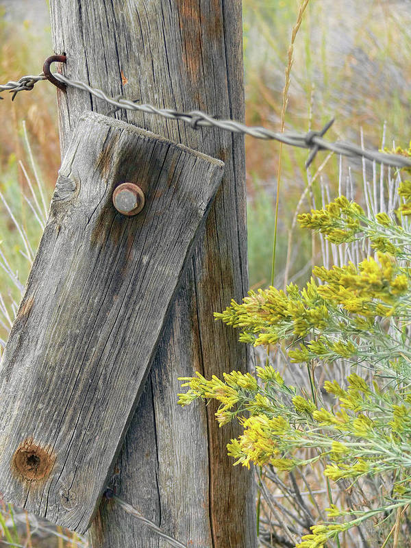 Fence Poster featuring the photograph Rustic Fence And Wild Flowers Montana by Jennie Marie Schell