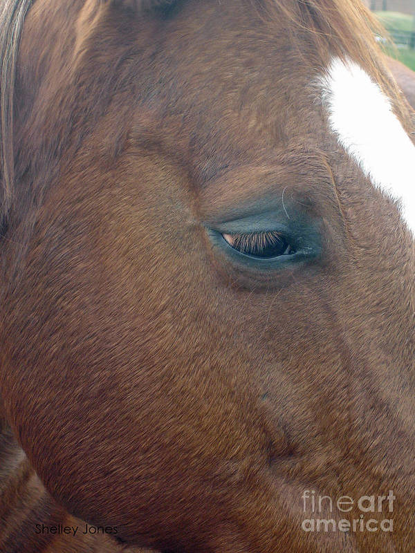 Horse Poster featuring the photograph Sad Eyed by Shelley Jones