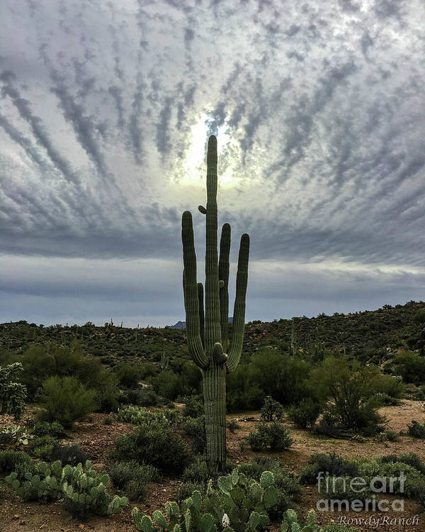 Sun Poster featuring the photograph Saguaro Sun Break Clouds by Katie Brown