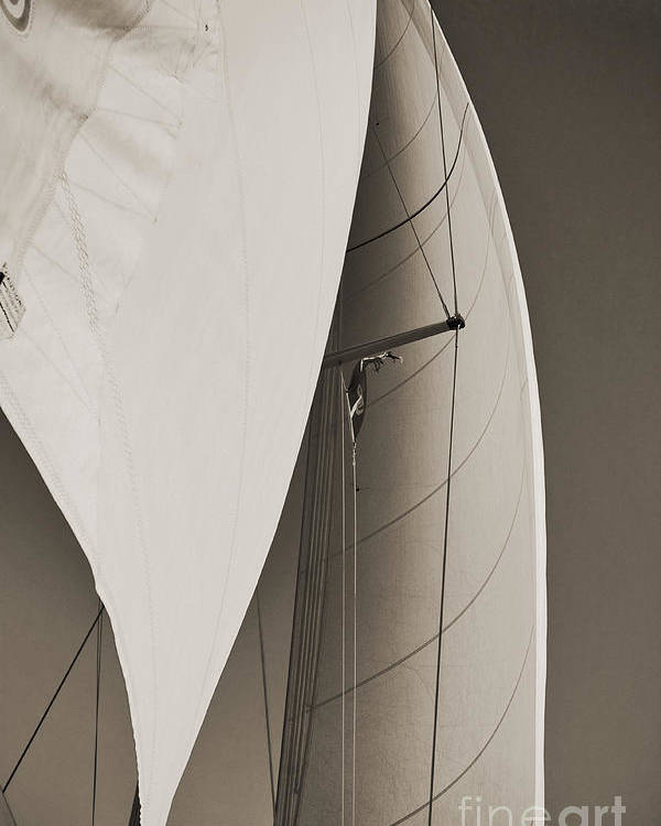Sailing Poster featuring the photograph Sails by Dustin K Ryan