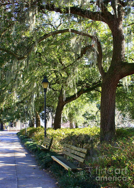 Parks Poster featuring the photograph Savannah Benches by Carol Groenen