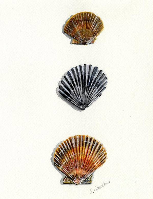 Scallop Poster featuring the painting Scallop Shell Trio by Sheryl Heatherly Hawkins