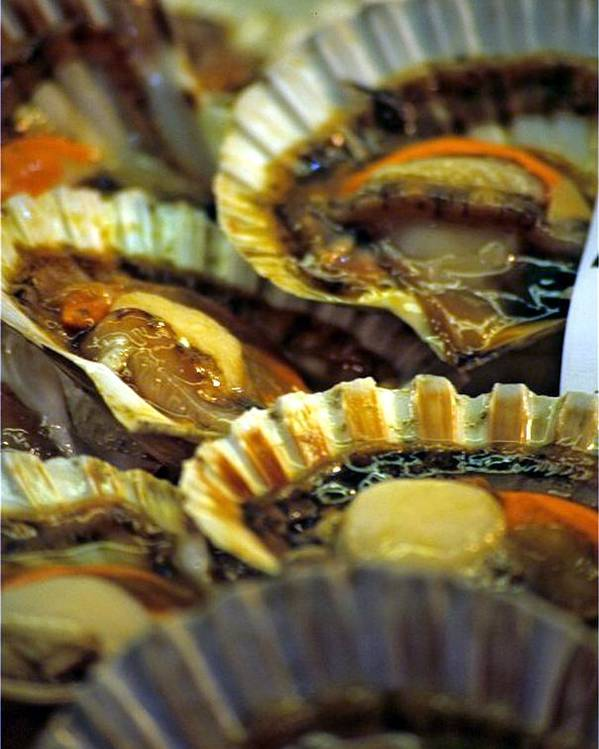 Venice Poster featuring the photograph Scallops At Rialto Market In Venice by Michael Henderson