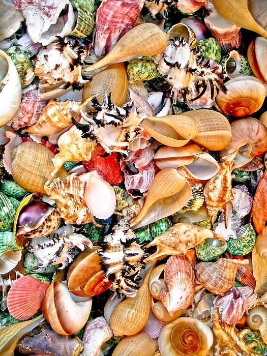 Sea Shell Poster featuring the photograph Sea Shells by Jim DeLillo