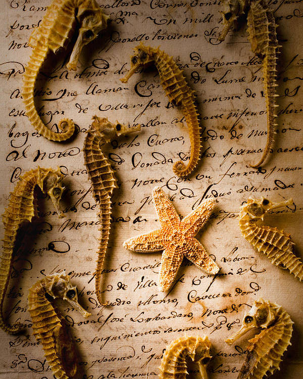 Seahorses Starfish Old Letter Words Poster featuring the photograph Seahorses And Starfish On Old Letter by Garry Gay