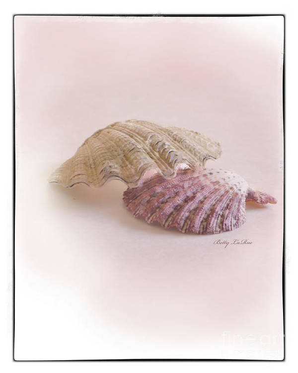 Sea Shell Poster featuring the photograph Seashell Love by Betty LaRue