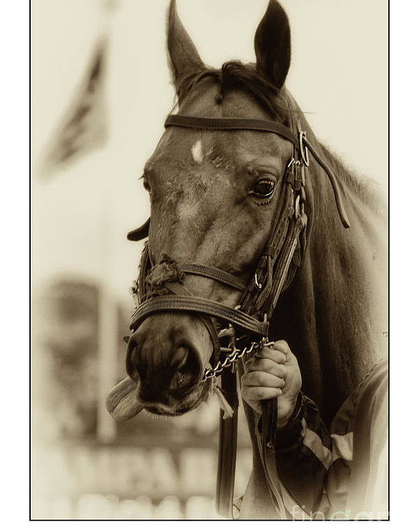 Horse Poster featuring the photograph Sephia Racehorse by Stephanie Hayes