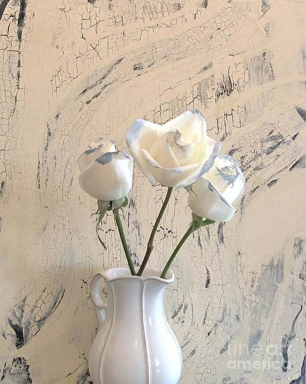 Photo Poster featuring the photograph Shabbi Chic Roses by Marsha Heiken