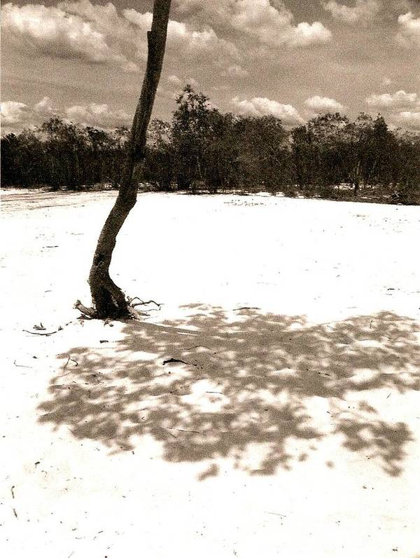 Photograph Poster featuring the photograph Shade Tree by Patricia Bigelow