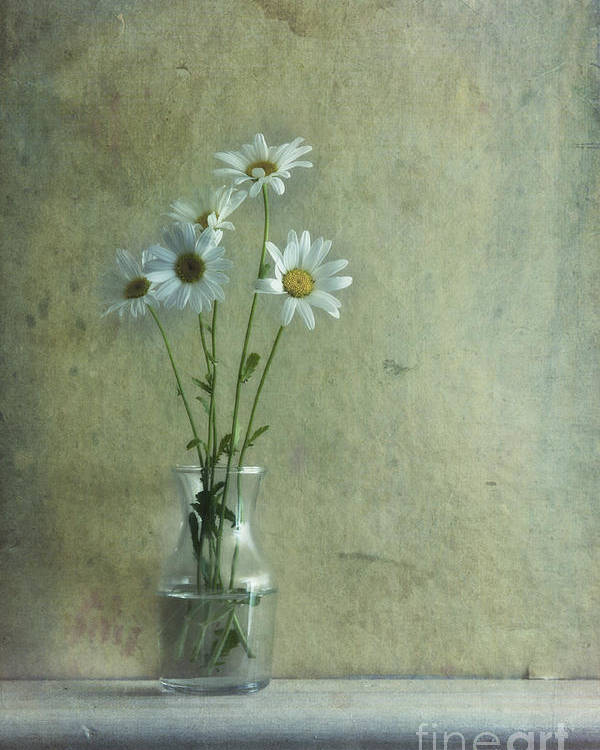 Daisy Poster featuring the photograph Simply Daisies by Priska Wettstein