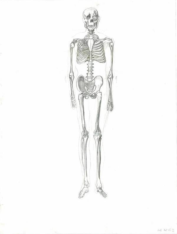 Poster featuring the drawing Skeleton by Joseph Arico
