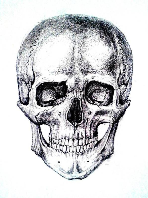 Skull Poster featuring the drawing Skull Drawing by Aleksandra Savova