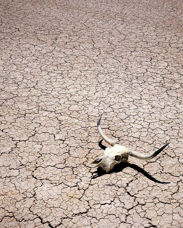 Desert Poster featuring the photograph Skull In Desert by Kelley King
