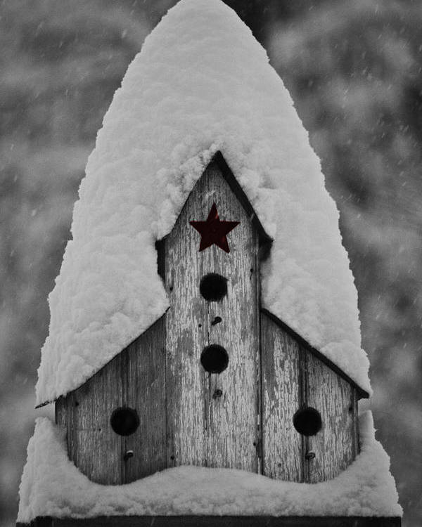 Snow Poster featuring the photograph Snow Covered Birdhouse by Teresa Mucha