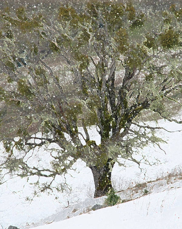 Tree Poster featuring the photograph Snow Tree by Carol Eliassen