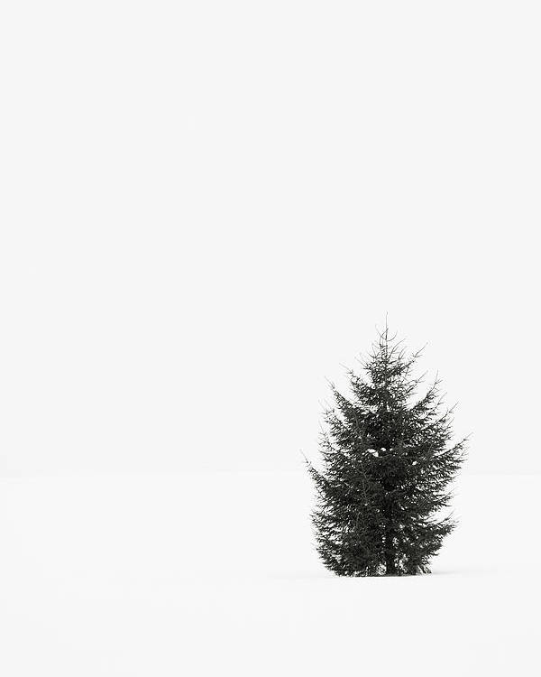 Vertical Poster featuring the photograph Solitary Evergreen Tree by Jennifer Squires