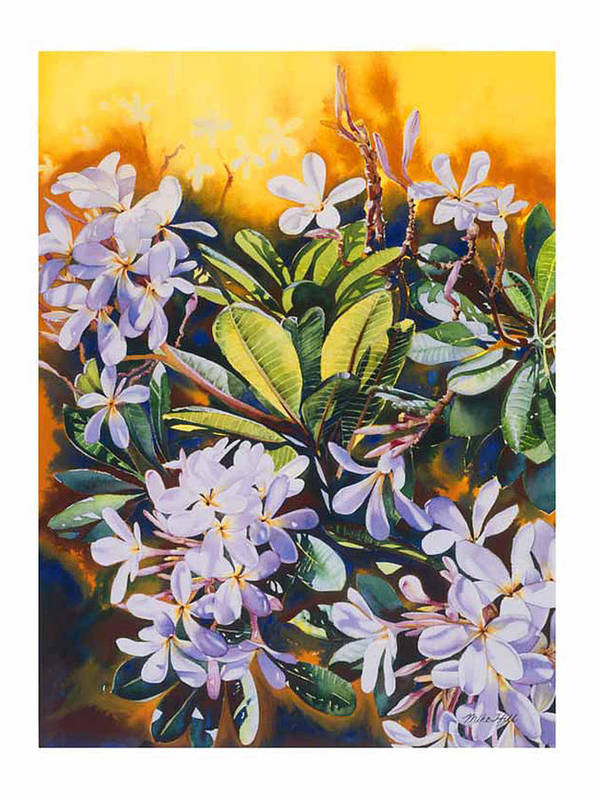Plumeria Maui Kihea Hawaii White Yellow Tree Warm Hot Fragrant Poster featuring the painting Some Like It Hot by Mike Hill