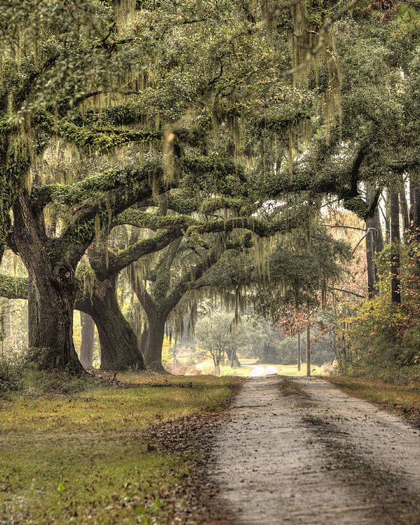 Plantation Poster featuring the photograph Southern Drive Live Oaks And Spanish Moss by Dustin K Ryan
