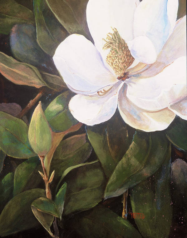 Floral Poster featuring the painting Southern Magnolia by Jimmie Trotter