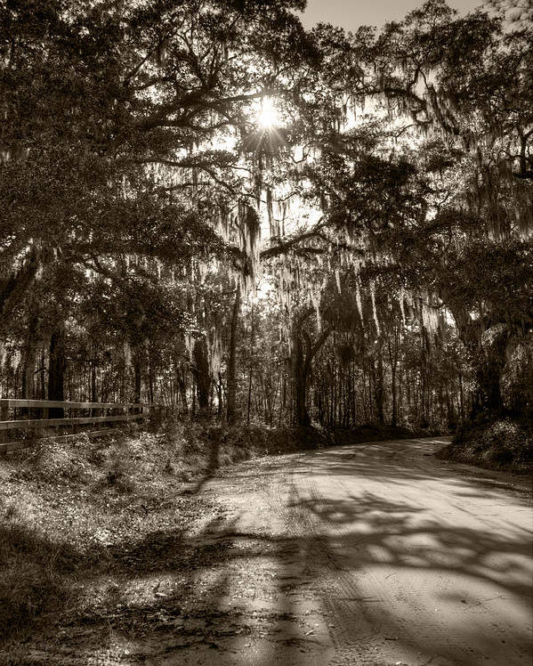 Live Oak Poster featuring the photograph Southern Oak Shadows by Dustin K Ryan