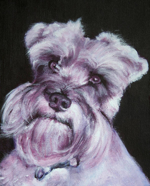 Schnauzer Poster featuring the painting Spike by Fiona Jack
