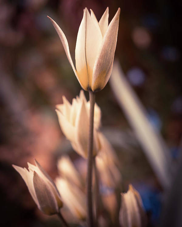 Spring Flowers Poster featuring the photograph Spring Flowers 2 by Lilia D