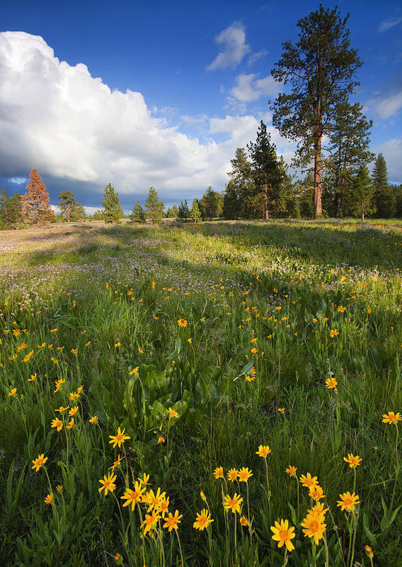 Meadow Poster featuring the photograph Spring Shadows by Mike Dawson