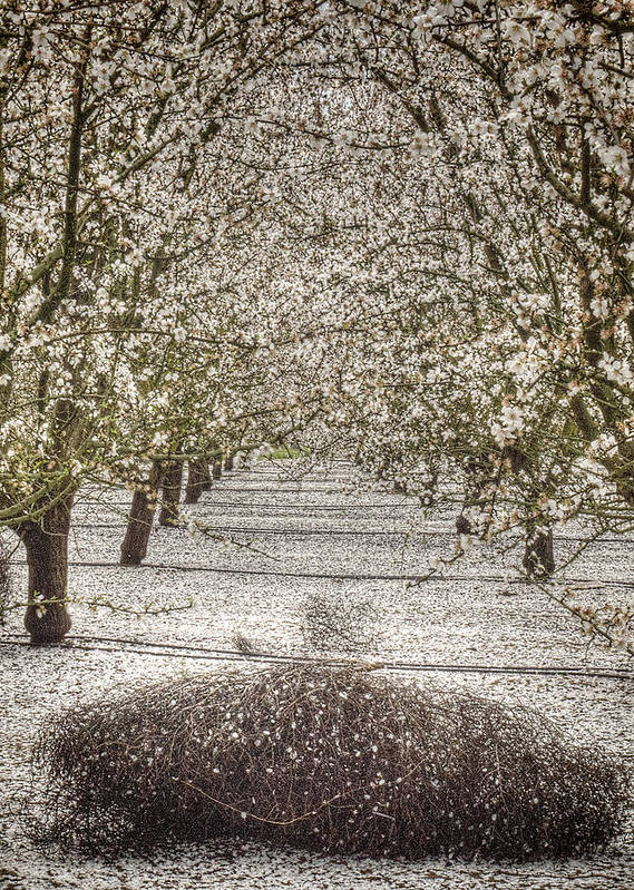 Orchards Poster featuring the photograph Spring Snow by Tara Schendel