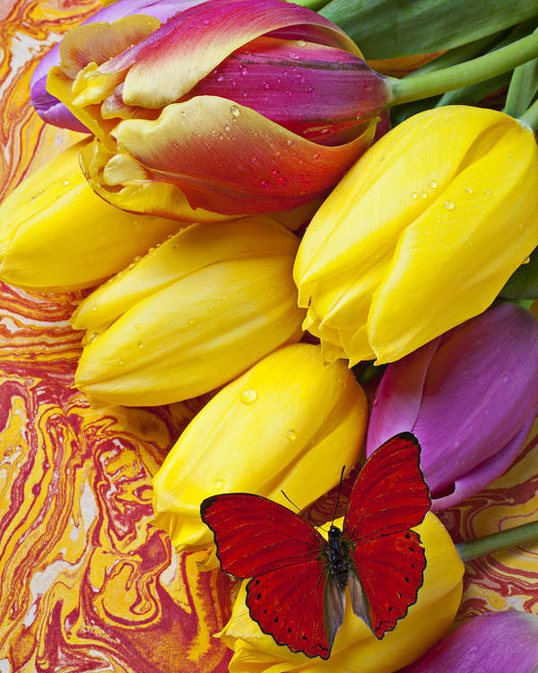 Red Poster featuring the photograph Spring Tulips by Garry Gay