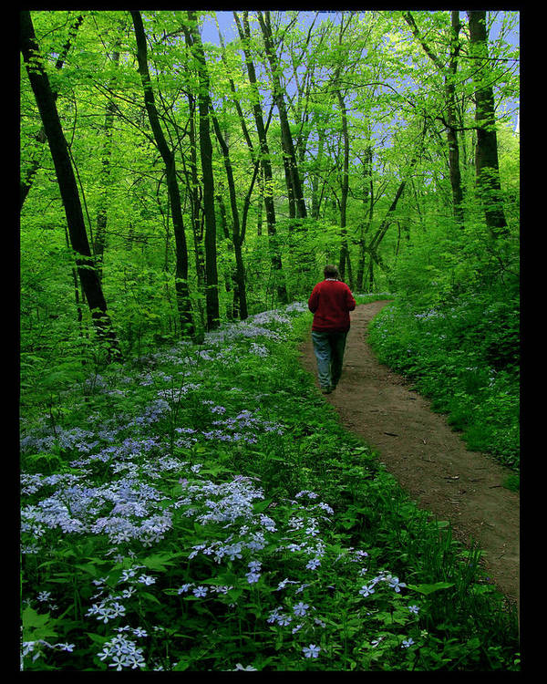 Wildflowers Poster featuring the photograph Spring Walker by Diana Ludwig