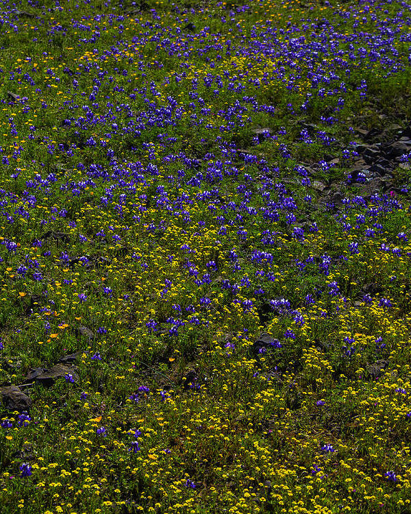 Wildflowers Poster featuring the photograph Spring Wildflowers by Garry Gay