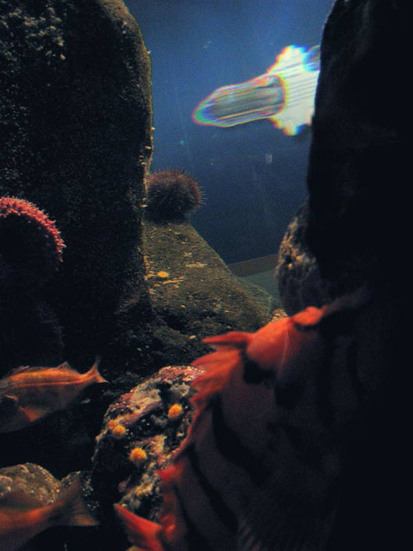 Fish Poster featuring the photograph Squid And Fish by Jess Thorsen