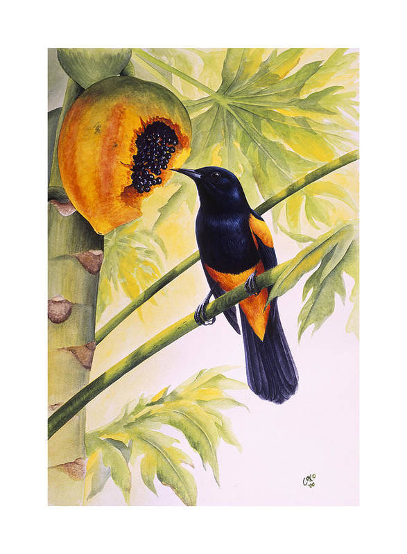 Chris Cox Poster featuring the painting St. Lucia Oriole And Papaya by Christopher Cox