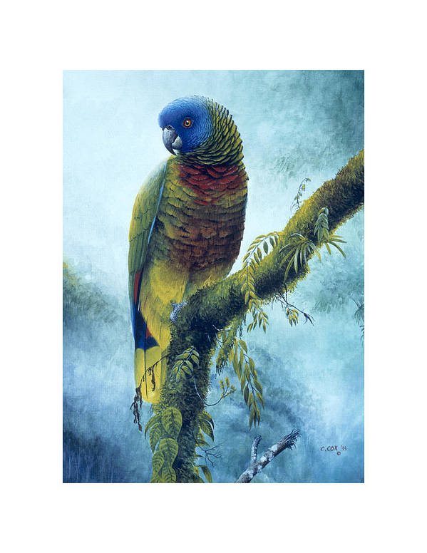 Chris Cox Poster featuring the painting St. Lucia Parrot - Majestic by Christopher Cox
