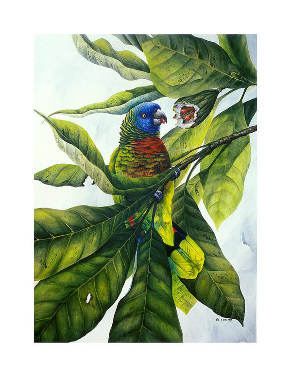 Chris Cox Poster featuring the painting St. Lucia Parrot And Fruit by Christopher Cox