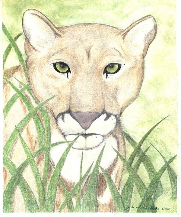 Mountain Lion Poster featuring the drawing Stalker by Jennifer Skalecke