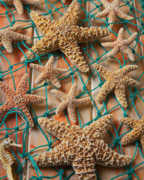 Starfish Poster featuring the photograph Starfish In Net by Garry Gay