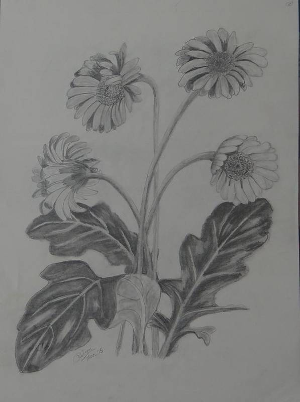 Stem Of Gerbera Bought From Flower Exhibition Cum Sale At Rajbhavan Of Dehradun Poster featuring the drawing stems of gerbera from Rajbhavan Dehradun by Saloni Verma