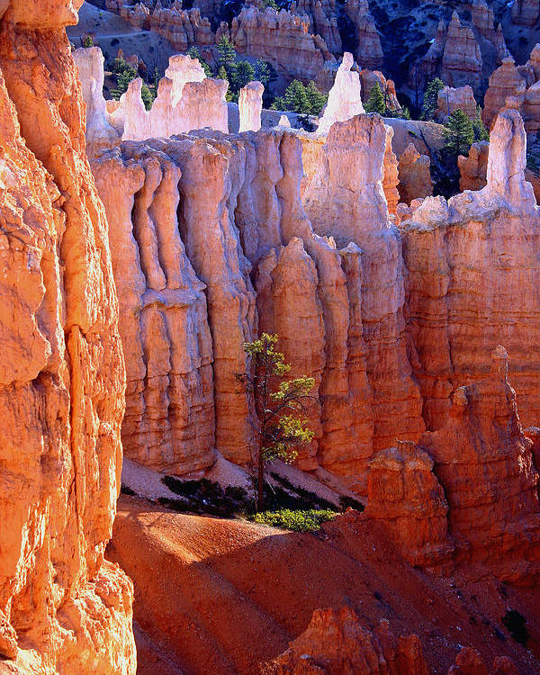 Bryce Canyon Poster featuring the photograph Sticks And Stones by Brian M Lumley