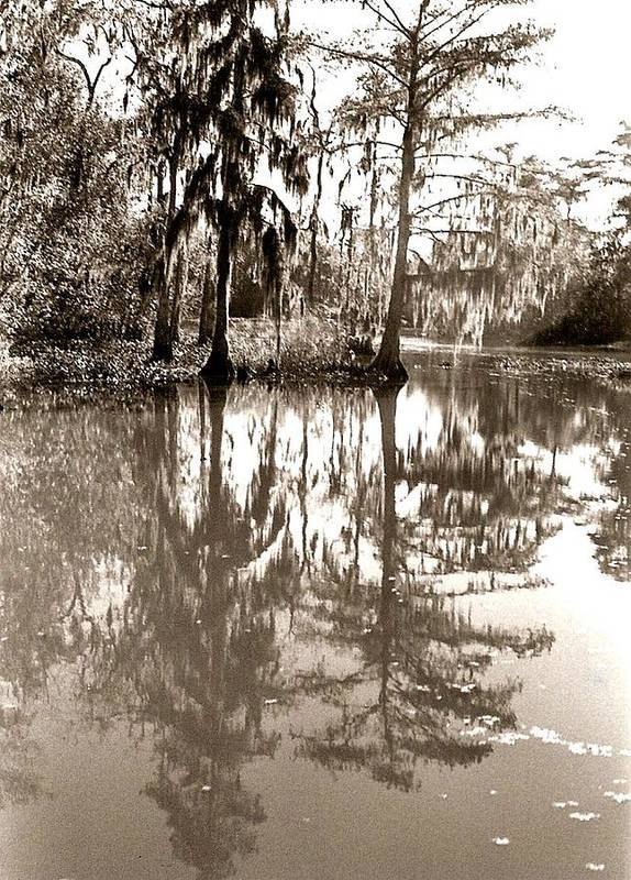 Photograph Poster featuring the photograph Stillness In The Glades by Patricia Bigelow