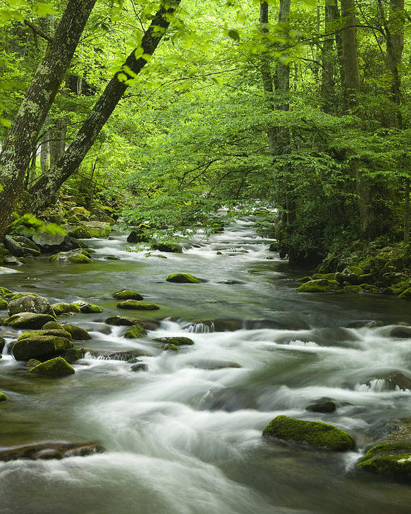 River Poster featuring the photograph Stream In The Smokies by Andrew Soundarajan