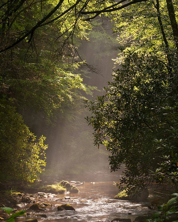 Blueridge Poster featuring the photograph Stream Light by Steve Gadomski