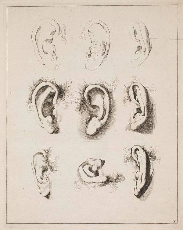 Ear Poster featuring the painting Studies Ears Anonimo, Blooteling Abraham by Blooteling Abraham