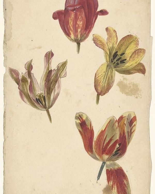 Flower Poster featuring the painting Studies Of Four Tulips, Elias Van Nijmegen, C. 1700 - C. 1725 by Elias van Nijmegen