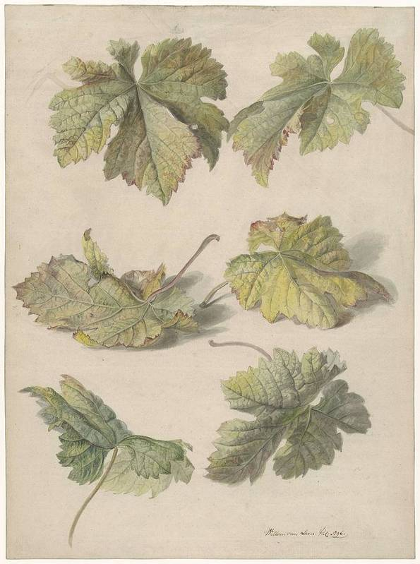Flower Poster featuring the painting Studies Of Vine Leaves, Willem Van Leen, 1796 by Willem van Leen