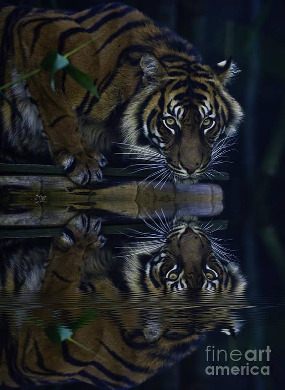 Sumatran Tiger Poster featuring the photograph Sumatran Tiger Reflection by Sheila Smart Fine Art Photography