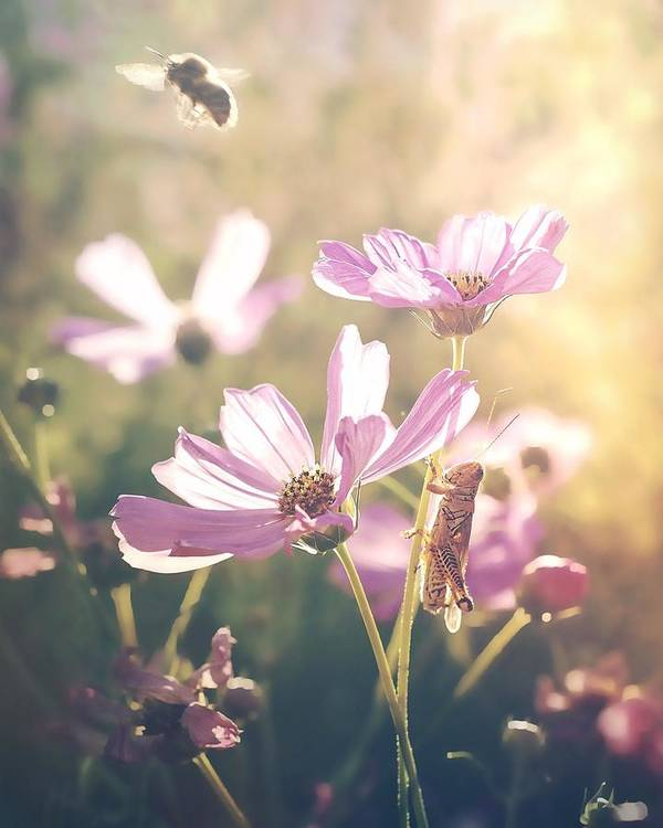 Bee Nature Flowers Summer Grasshopper Poster featuring the photograph Summer Love by Becca Stauffer