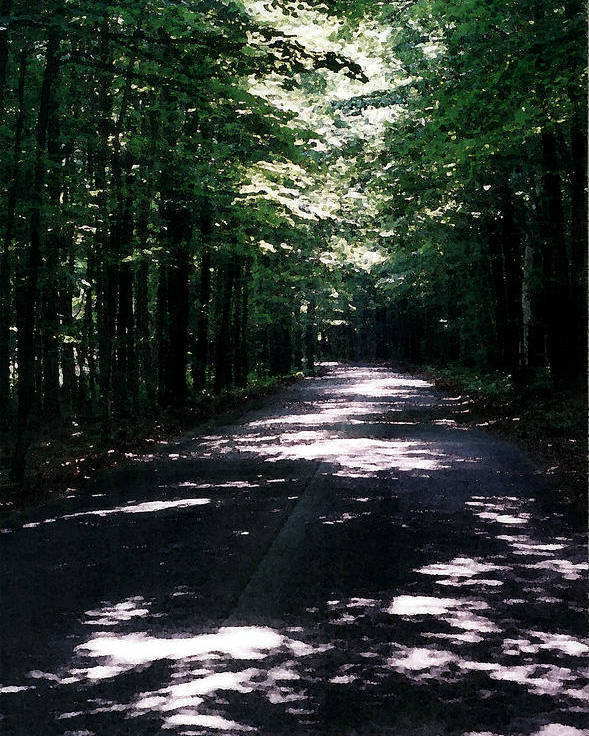 Forest Poster featuring the photograph Sun And Shadow Road In Summer Imp Wc by Lyle Crump